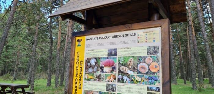 Cartel informativo setas y hongos en Aragón